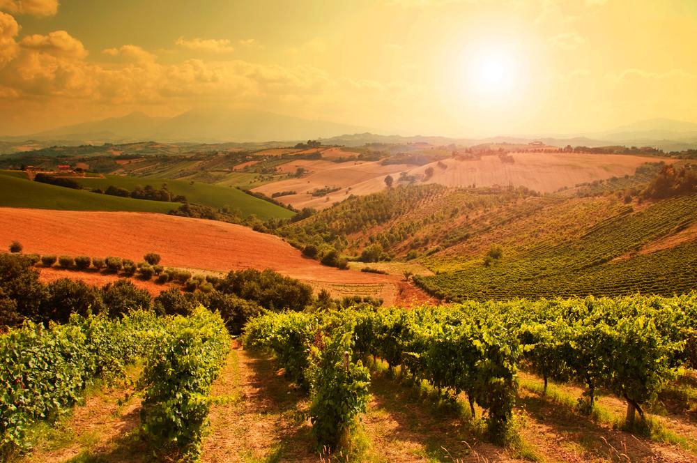 Vineyard Dining Guide